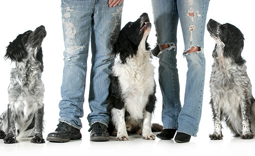 A Co-Parenting Approach to Pet Custody